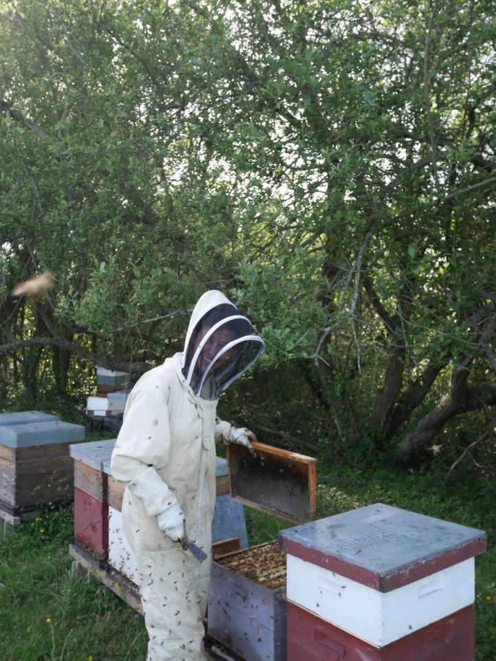 Angela Mallaroni abeille bleue